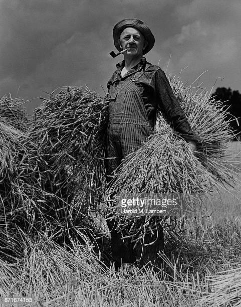 Portrait Of Senior Man Smoking Pipe And Holding Hay