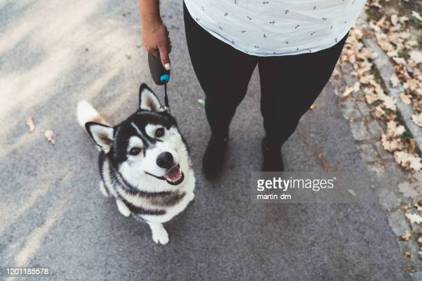 シベリアのハスキーの肖像 - ハスキー犬 ストックフォトと画像
