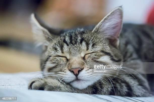 Portrait of sleeping cat