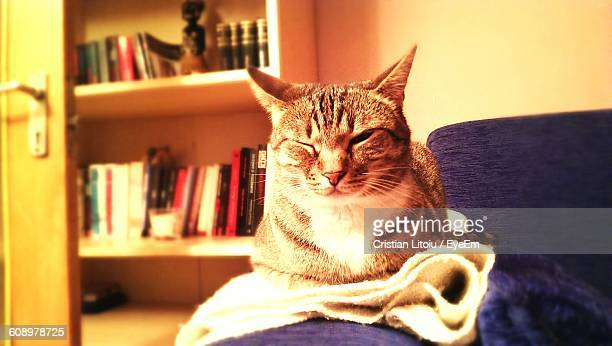 portrait of sleepy cat relaxing on couch at home - at home ストックフォトと画像
