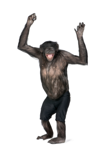 Portrait of smiling chimpanzee in shorts with arms raised 96759424