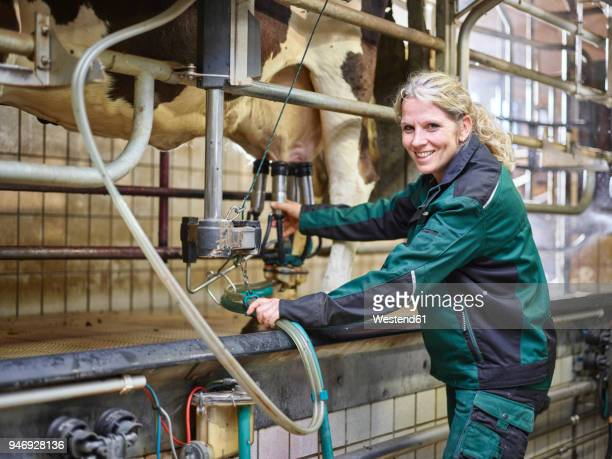portrait of smiling female farmer in stable milking a cow - female animal stock pictures, royalty-free photos & images