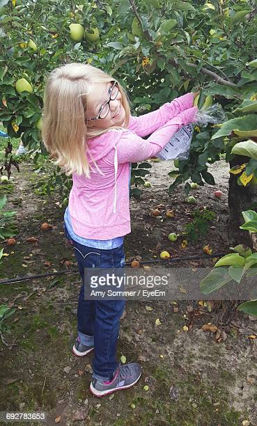 Portrait Of Smiling Girl Picking Apple From Tree In Orchard