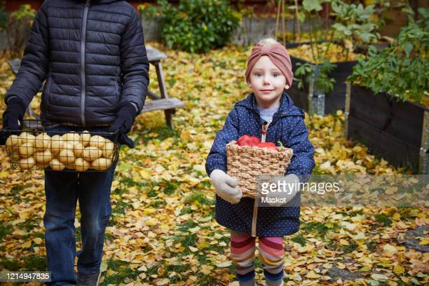 portrait of smiling girl with vegetable basket while standing by male sibling in back yard - mid section stock pictures, royalty-free photos & images