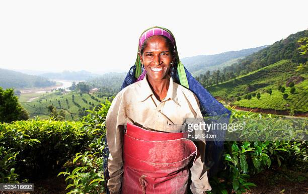 portrait of smiling tea picker, kerala, southern india - hugh sitton india stock pictures, royalty-free photos & images
