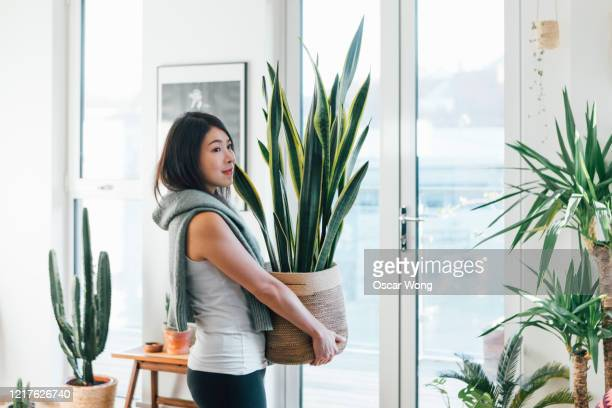 portrait of smiling woman carrying potted plant at home - lifestyles stock pictures, royalty-free photos & images