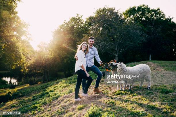 portrait of smiling young couple and sheep on sunny hillside - west sussex stock pictures, royalty-free photos & images