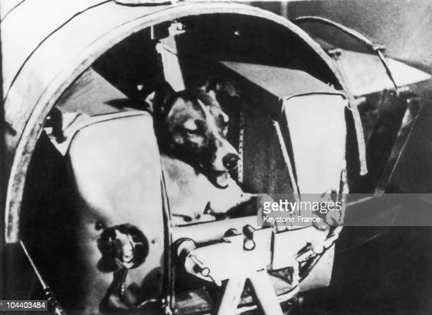 Portrait of Soviet space dog Laika in her specially designed canine compartment in the Sputnik II spacecraft prior to takeoff late 1957