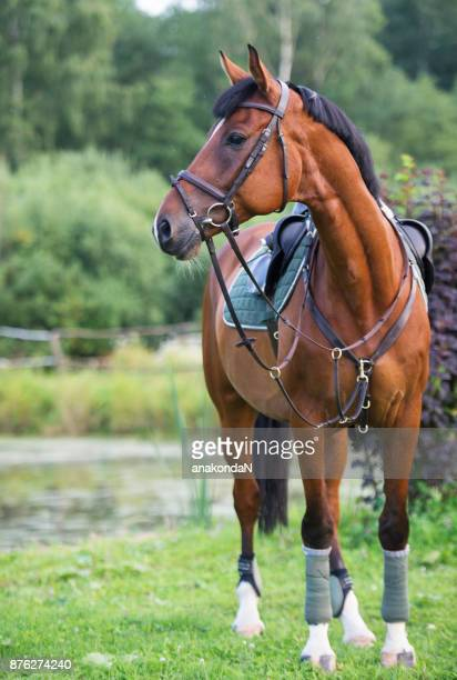 portrait of sportive horse poseing at lake background