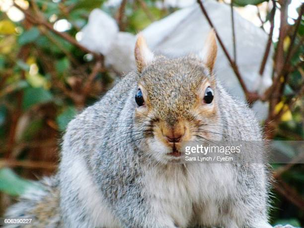 portrait of squirrel against plants - bethnal green stock pictures, royalty-free photos & images