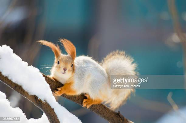 Portrait of squirrel on tree