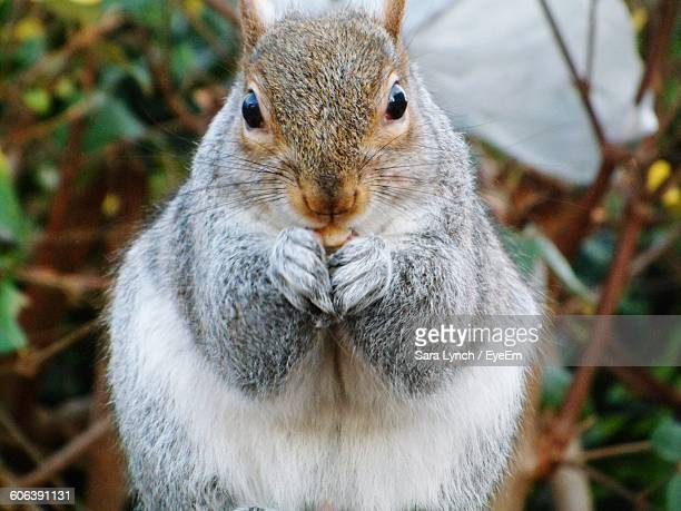 portrait of squirrel rearing up - bethnal green stock pictures, royalty-free photos & images