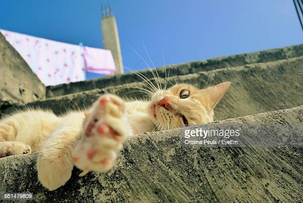 Portrait Of Stray Cat Resting On Steps Against Clear Blue Sky