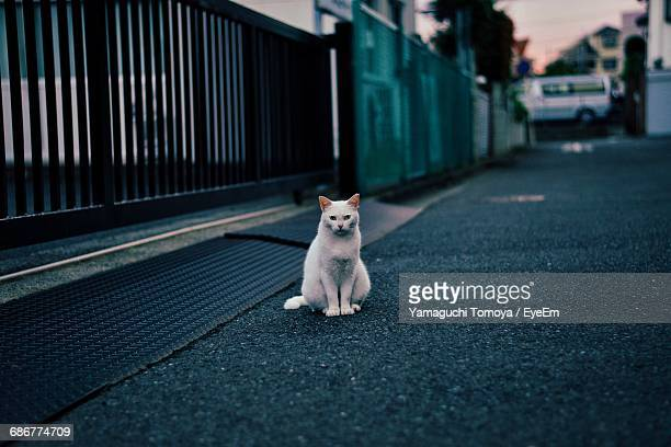 portrait of stray cat sitting on road by building gate - stray animal stock pictures, royalty-free photos & images