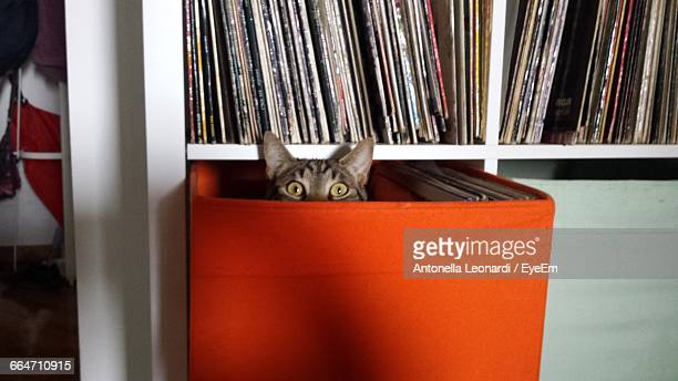 Portrait Of Surprised Cat In Box On Shelf At Home