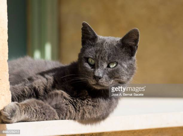 Portrait of tabby cat, brown hair and green eyes lying on the floor sunbathing