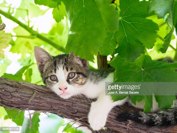 Portrait of tabby cat, brown hair and green eyes, raised on a tree resting