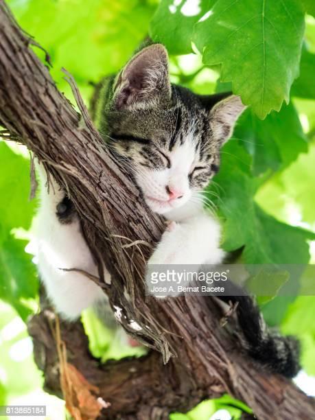 Portrait of tabby cat, brown hair and green eyes, raised on a tree sleep
