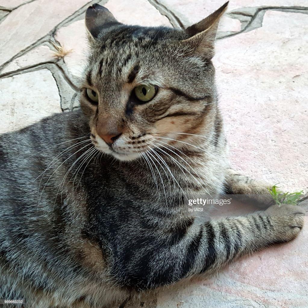 Portrait of tabby cat in majesty : Stock-Foto