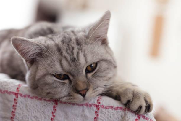 Portrait of tabby cat, Litoměřice, Czech Republic