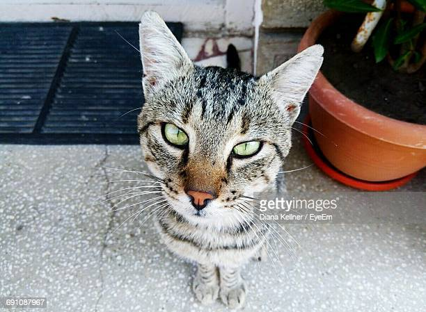 Portrait Of Tabby Cat Sitting By Potted Plant