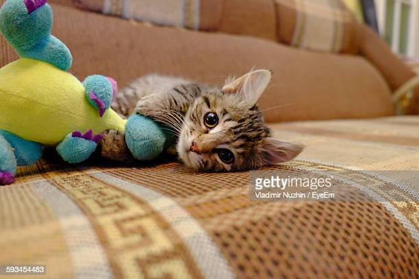 Portrait Of Tabby Kitten Lying With Toy On Sofa At Home