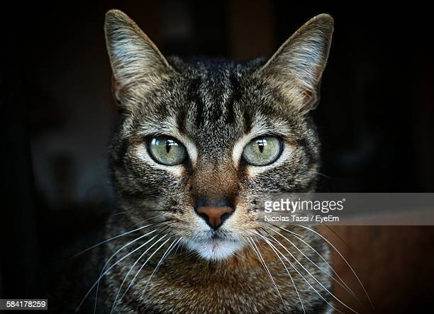 portrait of tabby - whisker stock pictures, royalty-free photos & images