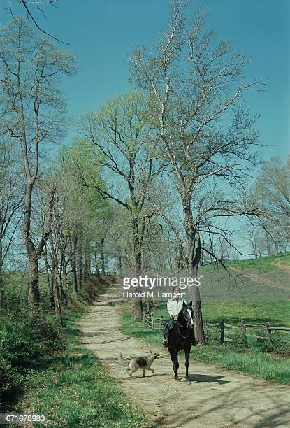 portrait of teenage girl riding horse in forest  - pawed mammal stock pictures, royalty-free photos & images