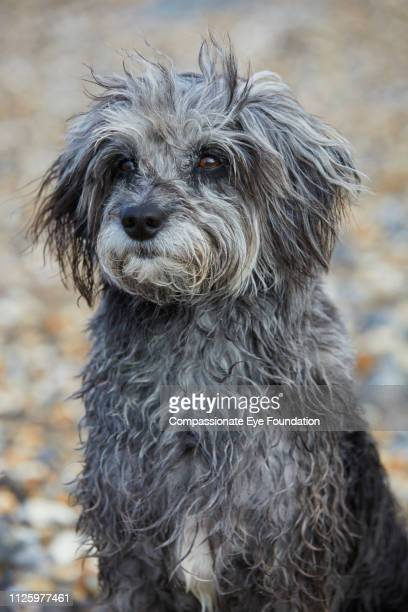 Portrait of Terrier on beach