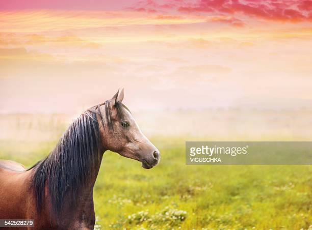 Portrait of thoroughbred horse on field at sunset