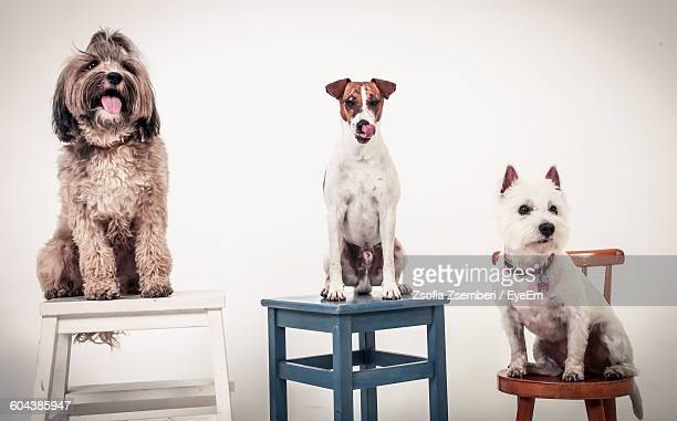 Portrait Of Three Dogs Over White Background
