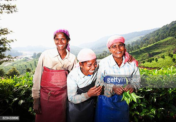 portrait of three tea pickers - hugh sitton india stock pictures, royalty-free photos & images