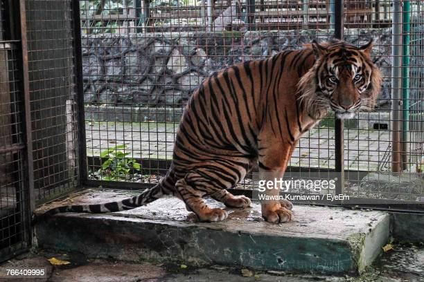 Portrait Of Tiger In Cage At Zoo