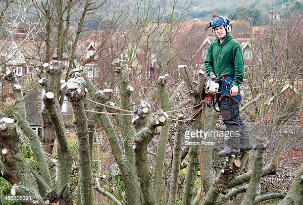 Portrait of tree surgeon up a tree holding chainsaw