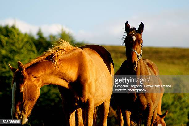 portrait of two horses - gregoria gregoriou crowe fine art and creative photography stock pictures, royalty-free photos & images