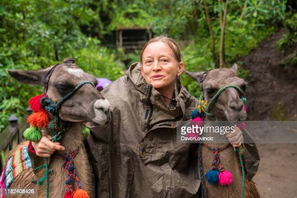 portrait of two lamas and smiling senior woman - south america stock pictures, royalty-free photos & images