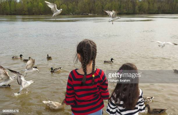 Portrait of two sisters, 3 years and 5 years watching and feeding ducks and seagulls in the Potomac River.