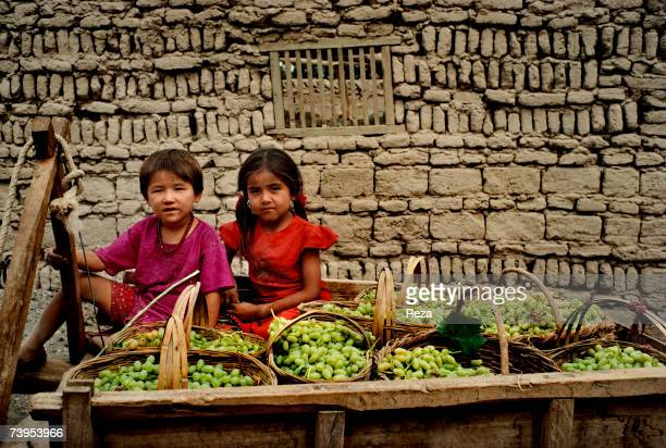 Portrait of Uighur children carrying on a cart the grape harvest in osier baskets in Turpan August 1995 in Turpan China