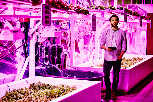 Portrait of urban farmer in pink LED greenhouse - gettyimageskorea