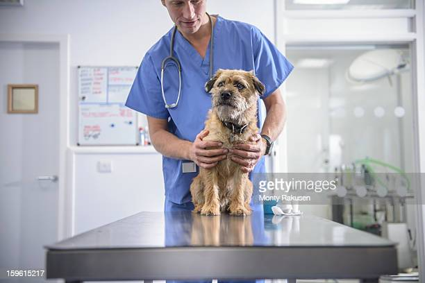 Portrait of vet holding dog on table in veterinary surgery