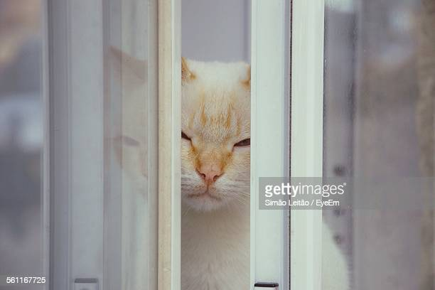 Portrait Of White Cat Behind Window
