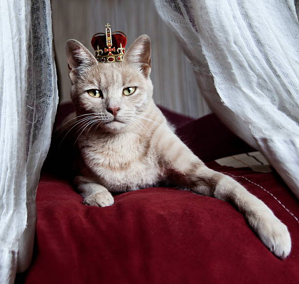 Portrait Of White Cat With Crown On Head Wall Art