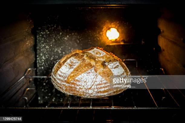 portrait of white country loaf in domestic kitchen oven - bread stock pictures, royalty-free photos & images