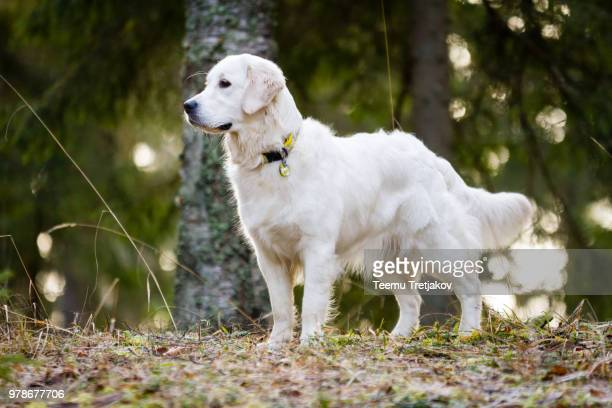 Portrait of white dog