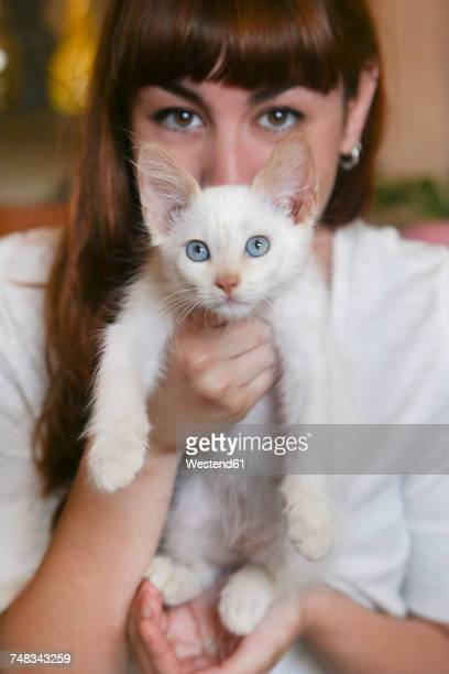 Portrait of white kitten with owner in the background