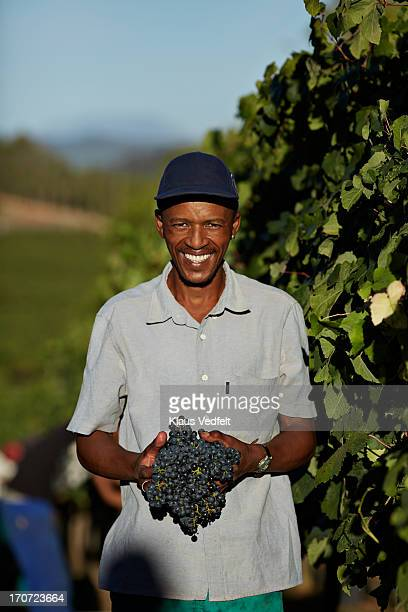 Portrait of wineworker carrying grapes