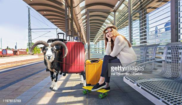 portrait of woman sitting on bench with goat at railroad station platform - val thoermer stock-fotos und bilder