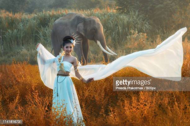 60 Top Sexy Elephant Pictures, Photos and Images - Getty Images