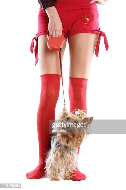 portrait of woman's legs with yorkshire dog on leash - hairy legs stock photos and pictures