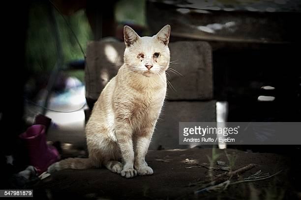Portrait Of Wounded Cat Sitting On Table Outdoors